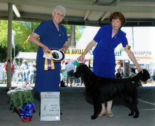Antelope Valley Kennel Club : Best Of Breed :