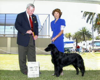 Channel City Kennel Club : Best Of Breed :