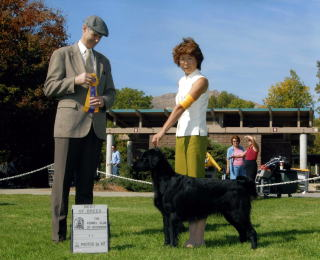 Kennel Club Of Riversid : Best Of Breed :