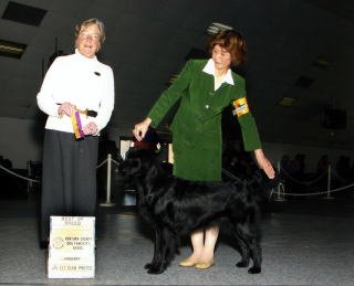 Ventura County Kennel Club : Best Of Breed :