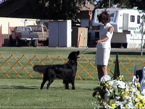 On 8/5/07, Tel took Group 1st at the Richmond Dog Show.